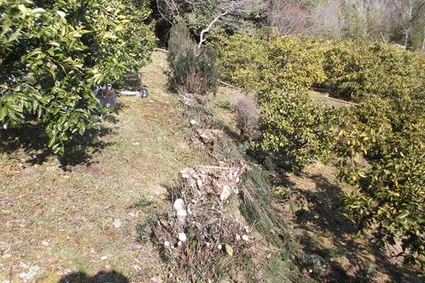 防風用マキの木切る