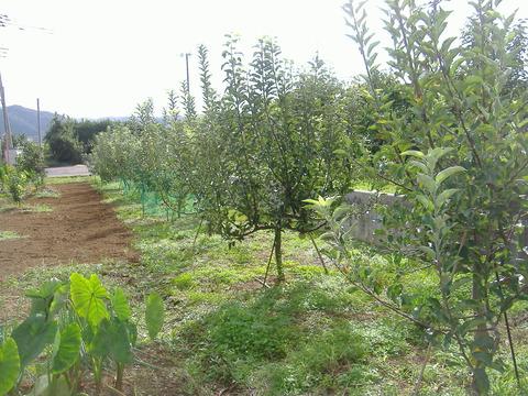趣味の林檎全景
