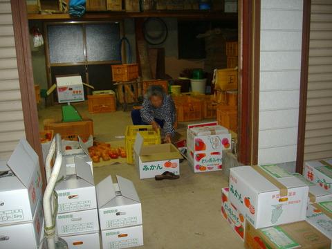 我が母85歳がみかん、柿の箱詰