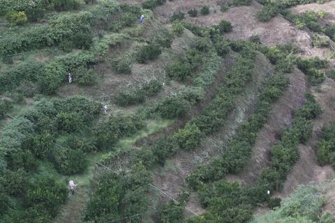 9-15PM園草刈作業風景