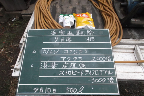 9-10柿消毒