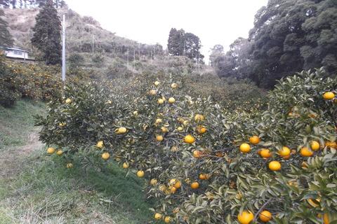 伊豆海農園-1