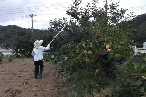 柿カメムシ消毒