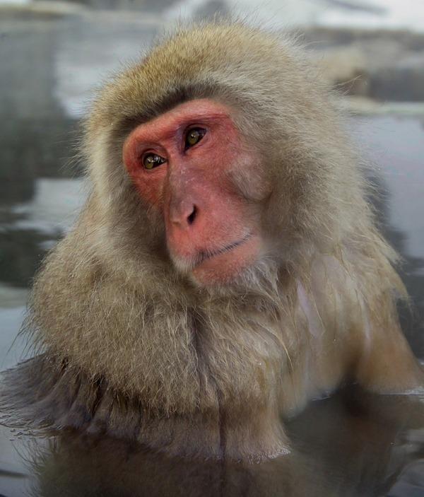 monkey-586245_1280