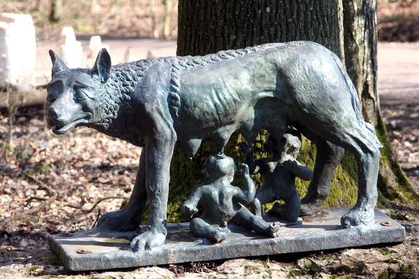 オオカミの社会性、イヌの定型発達症候群