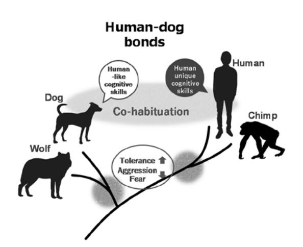 オキシトシンによるヒトとイヌの関係性