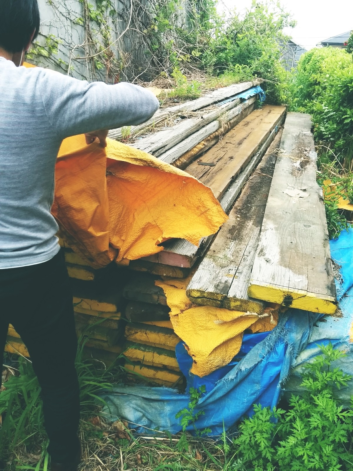 木材をもとめて海を渡る
