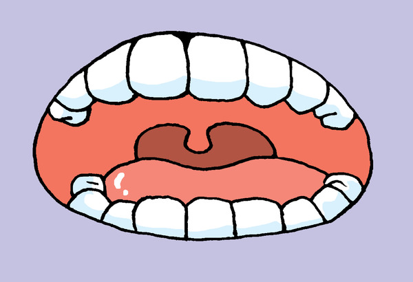 歯 イラスト 口中