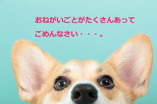 IMG_4602 - コピー
