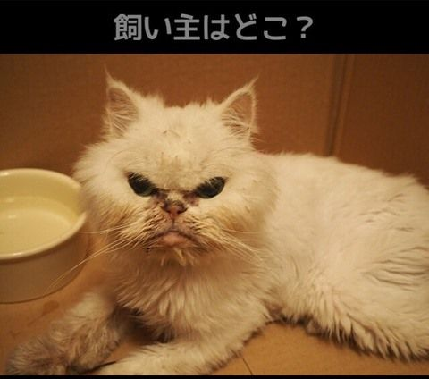 2017-8-8迷子猫