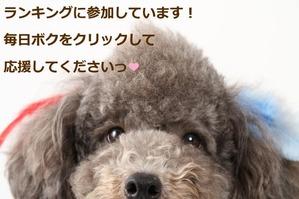 IMG_1696 - コピー (640x427)