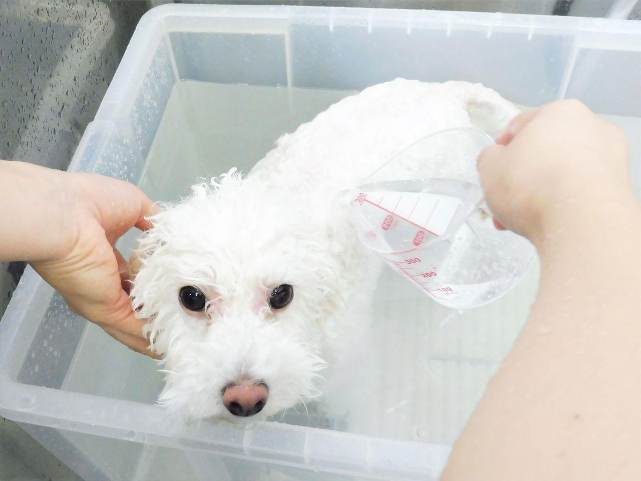 Resultado de imagen para 犬 Bichons 浴室