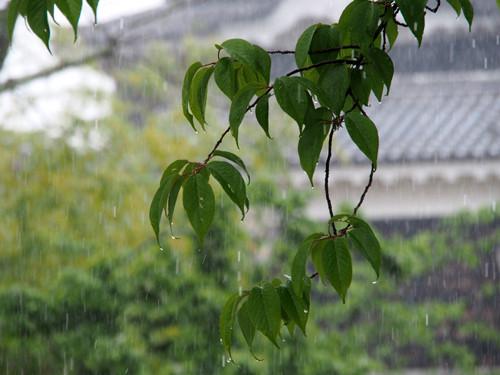 2017080408松山城にて天守と木の葉