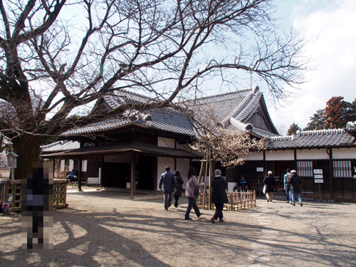 2017050303弘道館 玄関・右近の桜