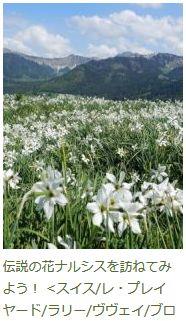 「伝説のナルシスの花を訪ねてみよう!」のブログ記事へ