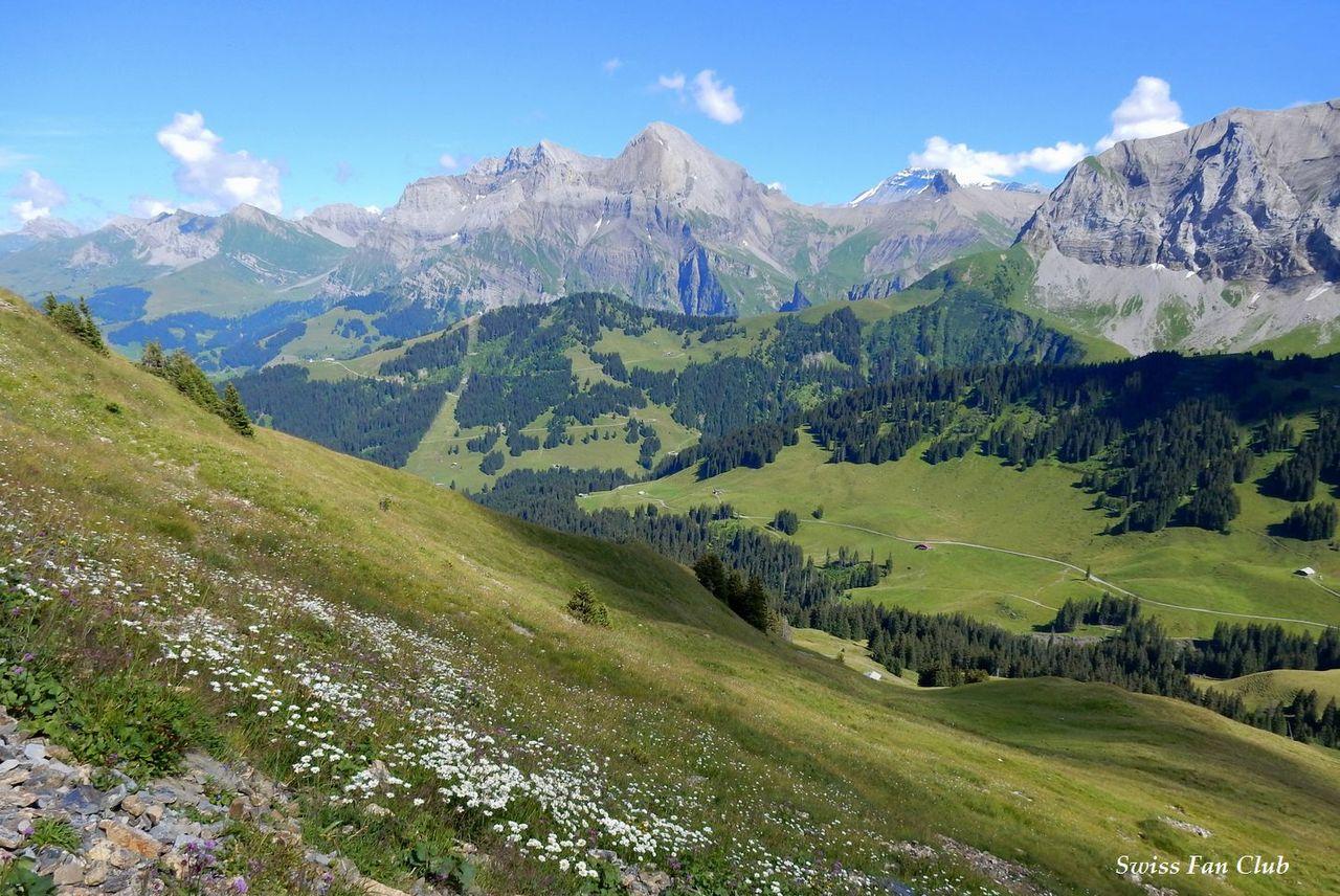 """花の道""""から見える美しい山のライン♪ #スイス #アーデルボーデン ..."""