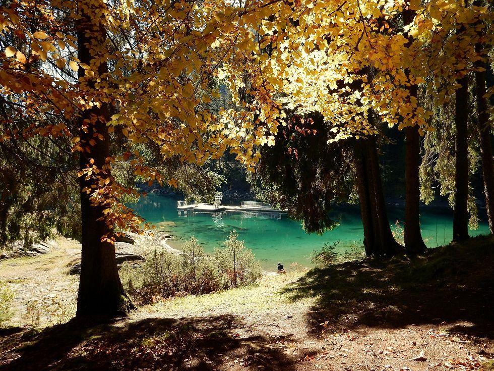 「木の葉 ひらひら」の画像検索結果