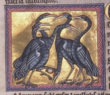 birdf45v