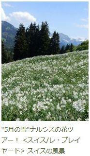 「ナルシスの花ツアー」のブログ記事へ