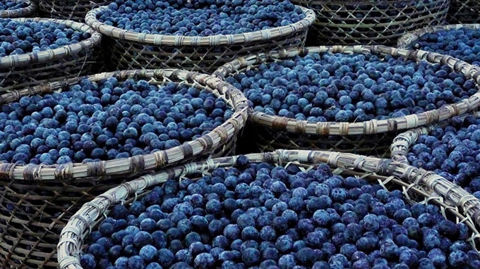 Acai-Berries