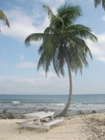 ココナッツの木の下で