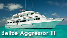 belize aggressor boat �