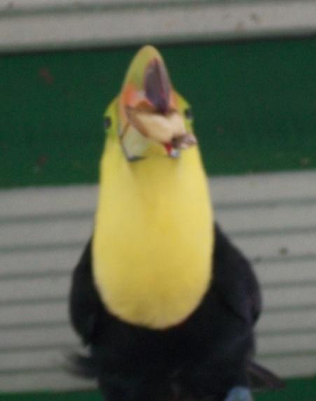 toucan4