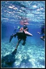 shark alay