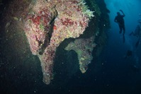 ブルーホール海底