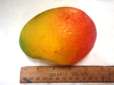 head mango