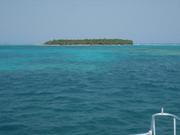 Global reef