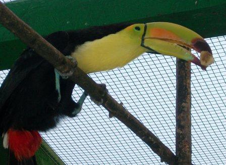 toucan0