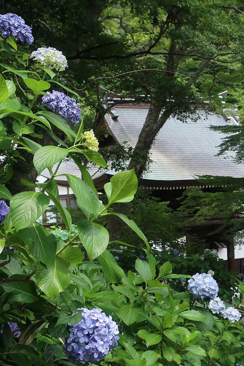 fumonji_9