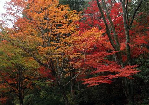愛知県民の森_1