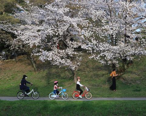 2021年桜と五万石藤推薦「桜めぐり」宮島元子