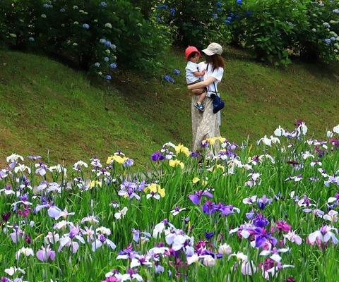 ④2021年花菖蒲【準特2】「ママに抱かれて」青井純一