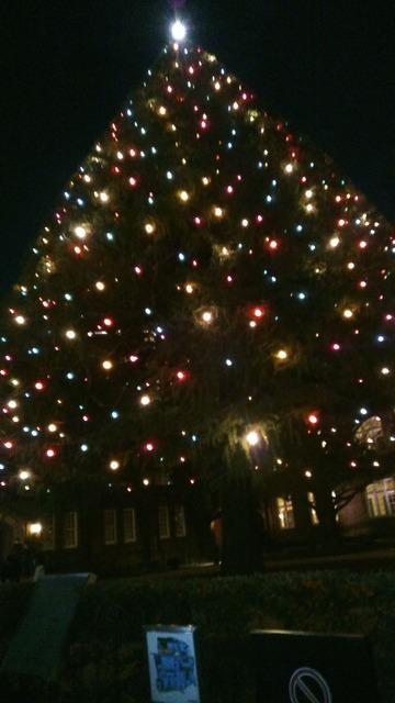 立教大学クリスマスツリー1