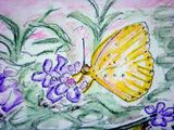 09 11  9  キチョウ 菊池渓谷