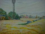 福岡郊外の麦の秋