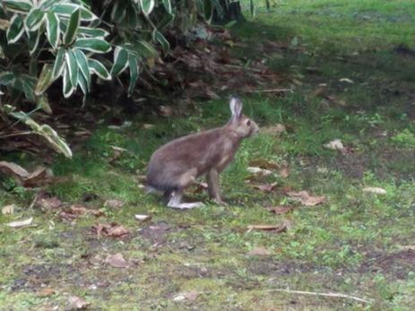 ウサギ_R