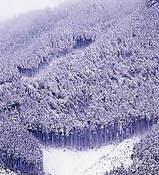 北山の里にも根雪