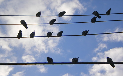 電線に群れて雀の懇親会