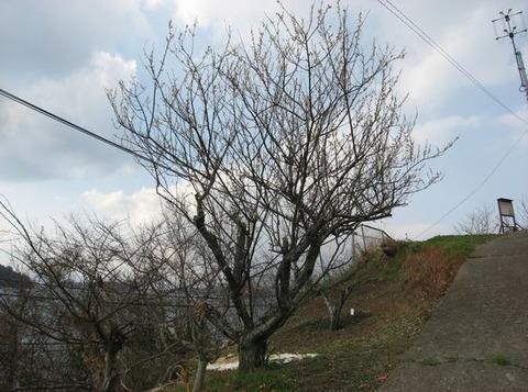 冬枯れの木にも