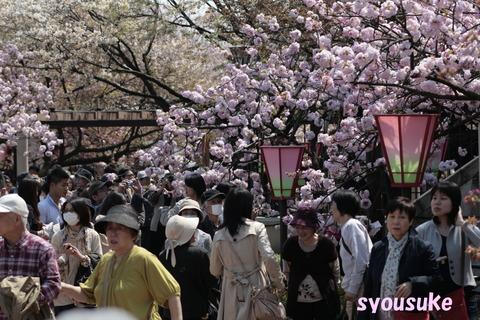 2012/4/18 造幣局通り抜け