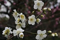 植物図鑑 写真:藤田公園