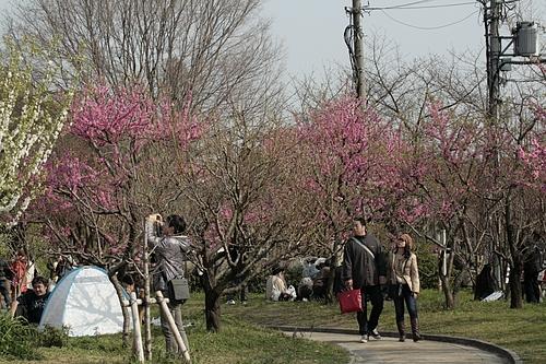 大阪城公園 桃園