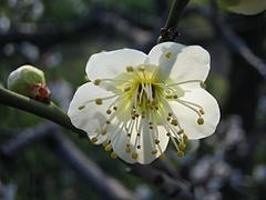 植物図鑑 写真:緑萼