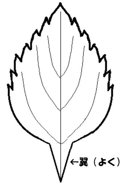 ヤマハッカ-翼