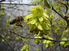 植物図鑑 写真:花粉玉