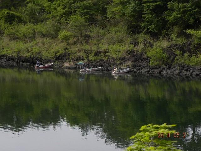 180521-2松の木前
